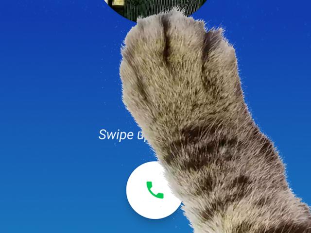 Google Telefono 9.0: zampa